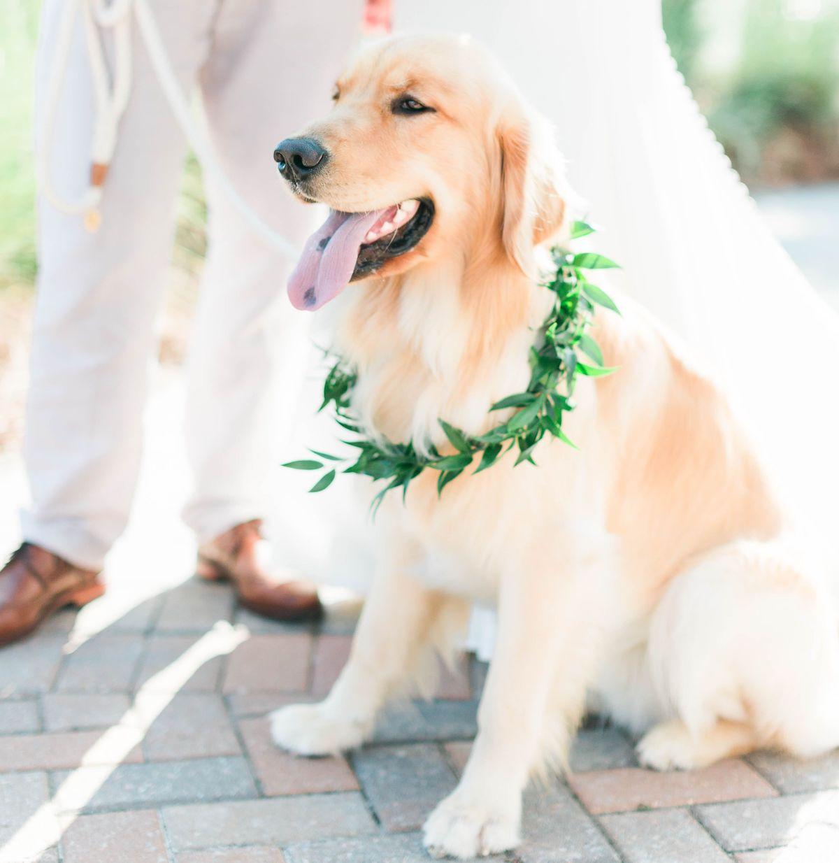 charleston-wedding-pet-friendly
